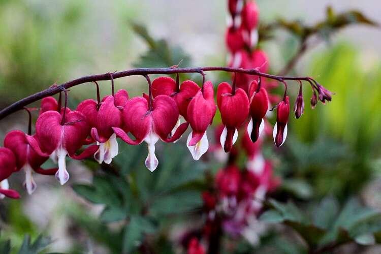 Vaste Planten Voor In De Tuin.Het Hele Jaar Bloeiende Vaste Planten In De Tuin